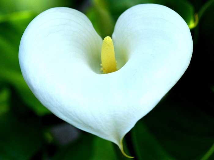 как раскрыть сердечную чакру