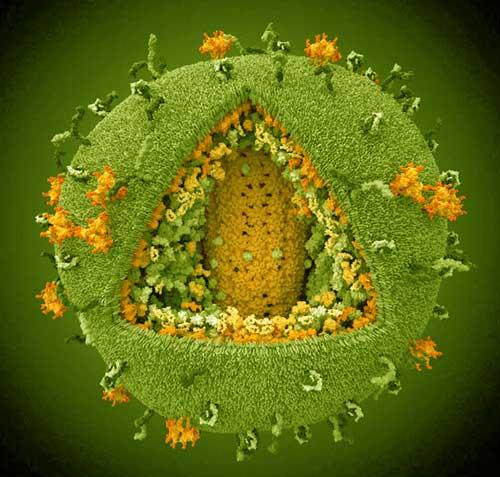 особенности вируса ковид-19